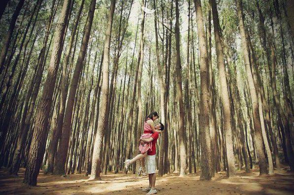 Alamat Hutan Pinus Mangunan Bantul