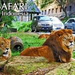Obyek Wisata canik di Bogor
